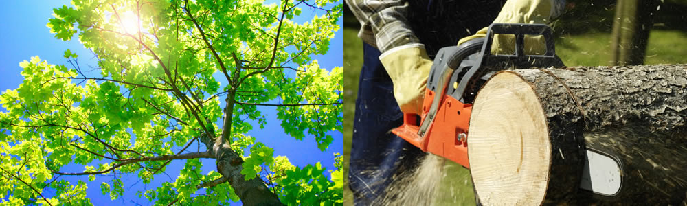 Tree Services Choctaw